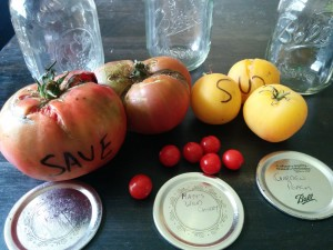 0.How to ferment tomato seeds for seed saving
